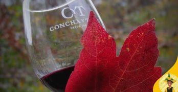Concha y Toro oferece curso online de vinhos e totalmente grátis
